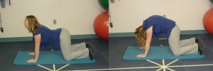 cat camel posture exercise